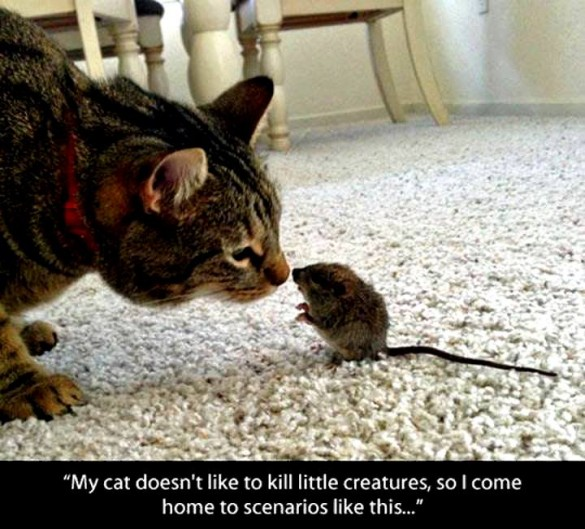 cat not kill creatures