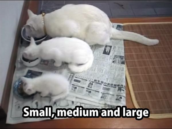 cat sizes