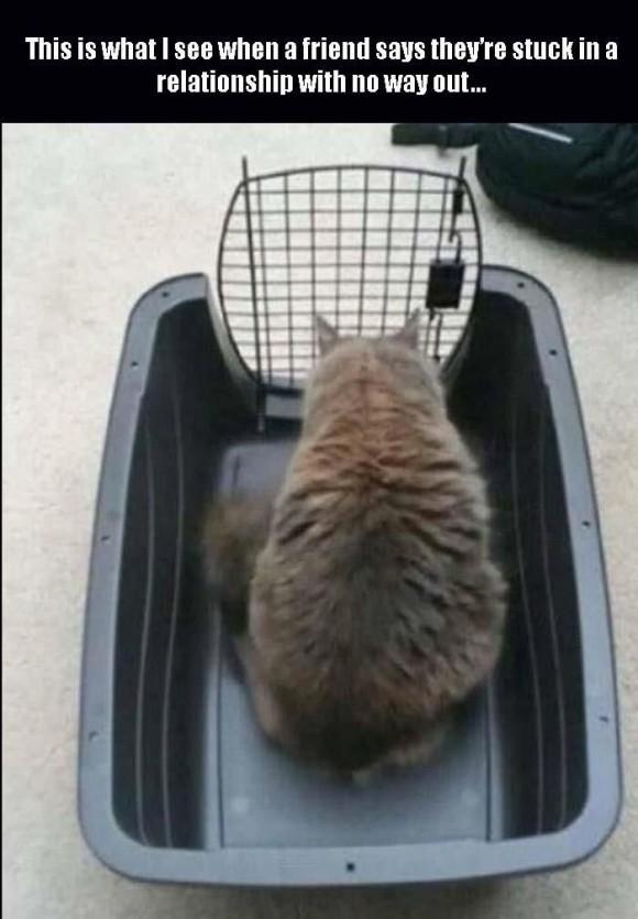 cat stuck relationship