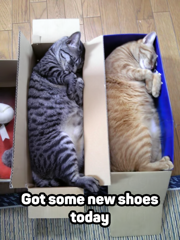 cats in shoes boxes