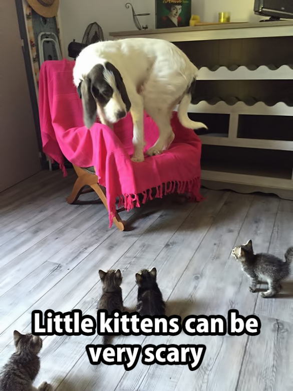 dog scared by kitten