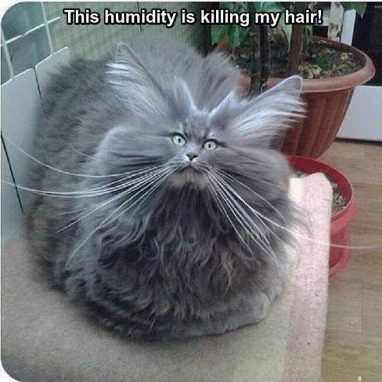 humidity cat