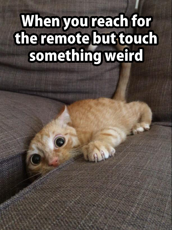 touch remote cat