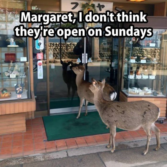 deers - shop not open