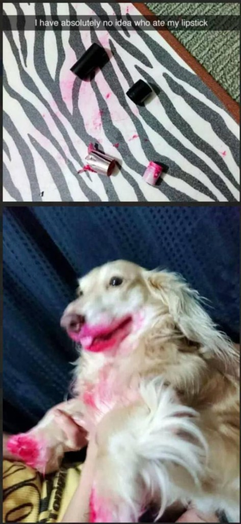 dog eating lipstick