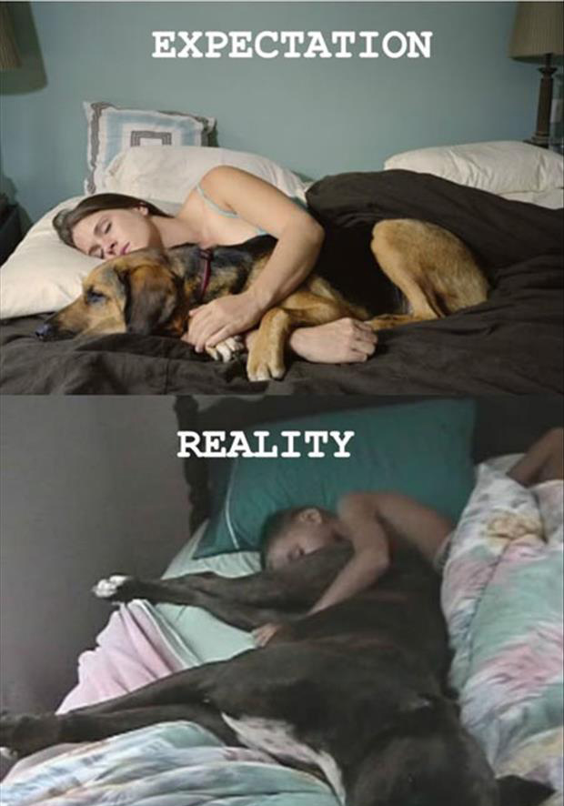 dog sleeping expectations-vs-reality