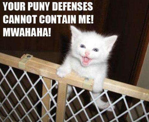 kitten escaping