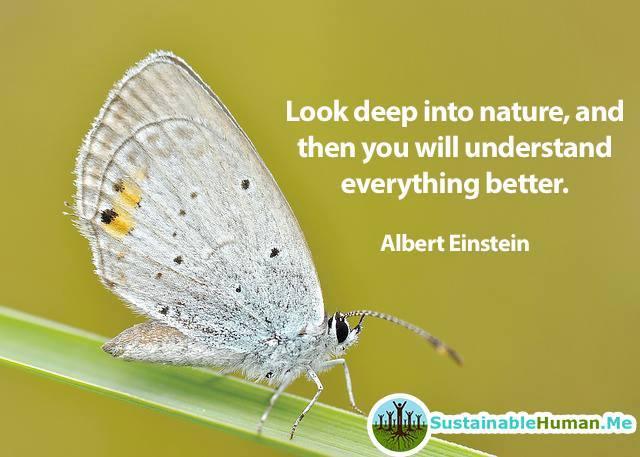 look into nature - einstein
