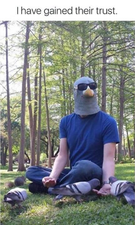 pigeon trust