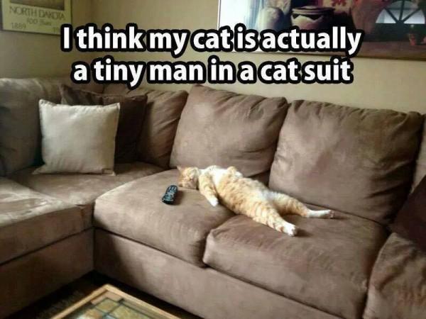 cat man in a cat suit