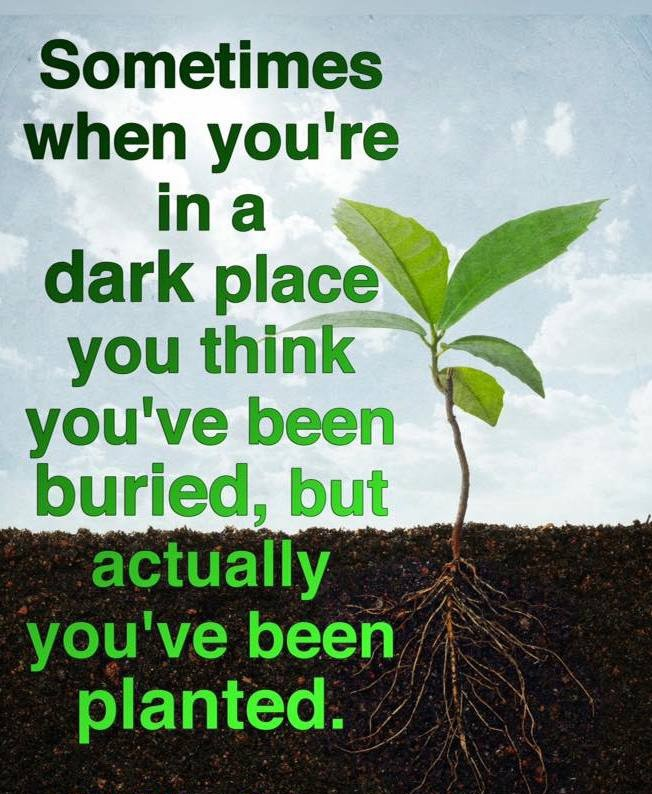 dark place - burried - planted