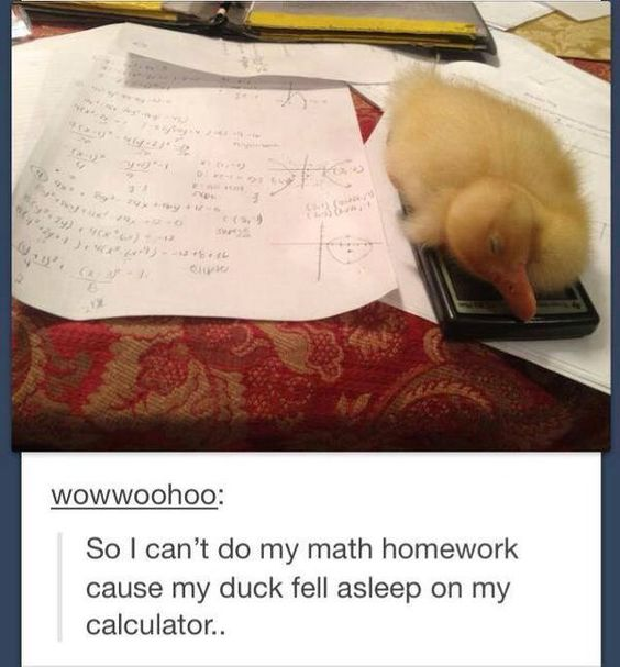 duck on calculator