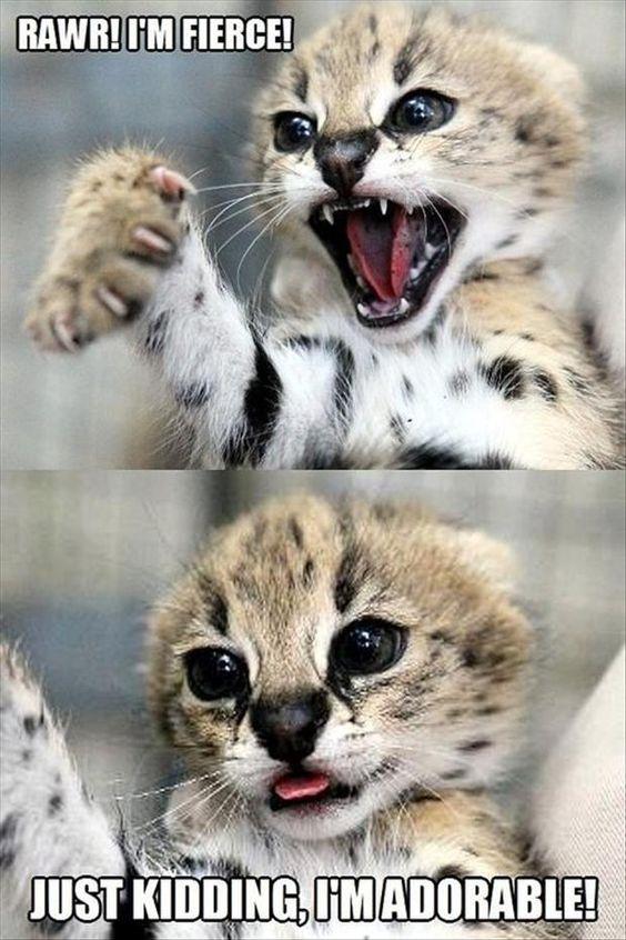 kitten fierce - adorable