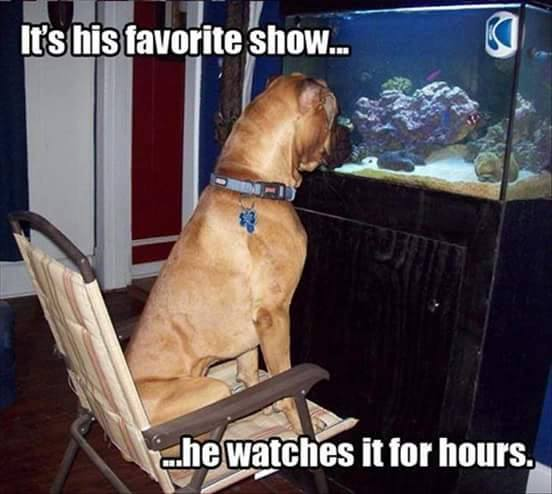 dogs favourite show