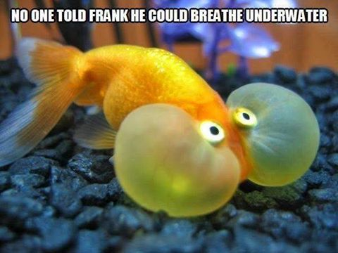 fish breathe underwater