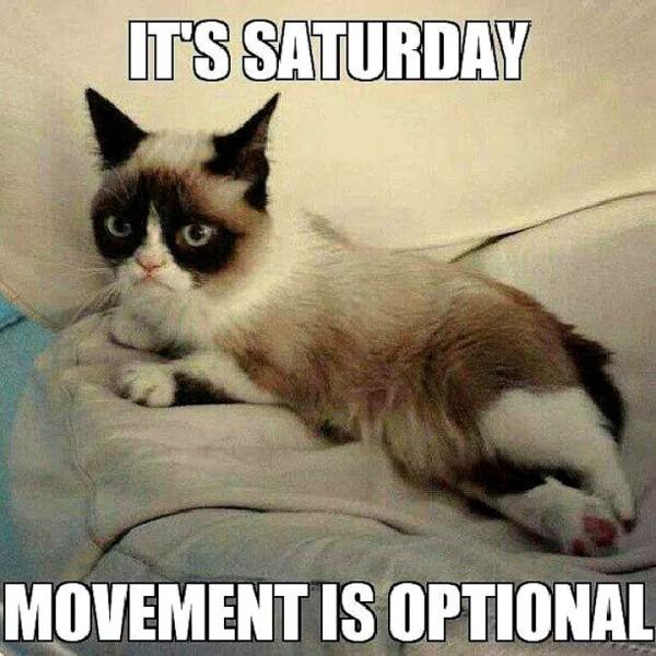 lazy saturday cat