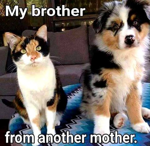 pet brother from another mother