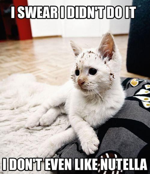 cat Nutella