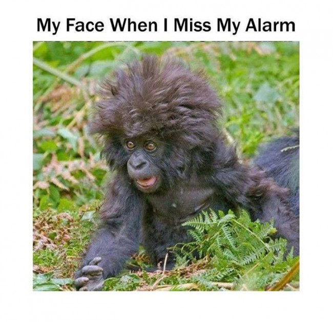 my face - miss the alarm