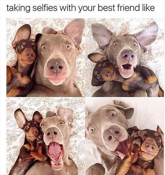 dog selfies