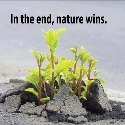 in the end nature wins