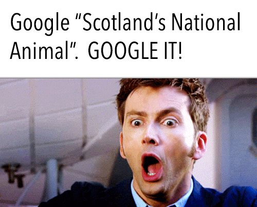 Scotland national animal