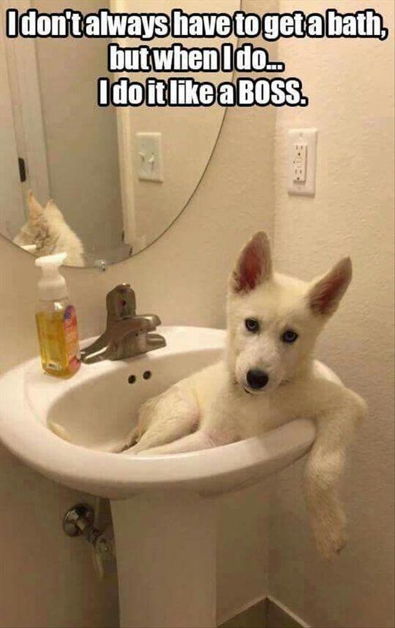 dog take bath like a boss