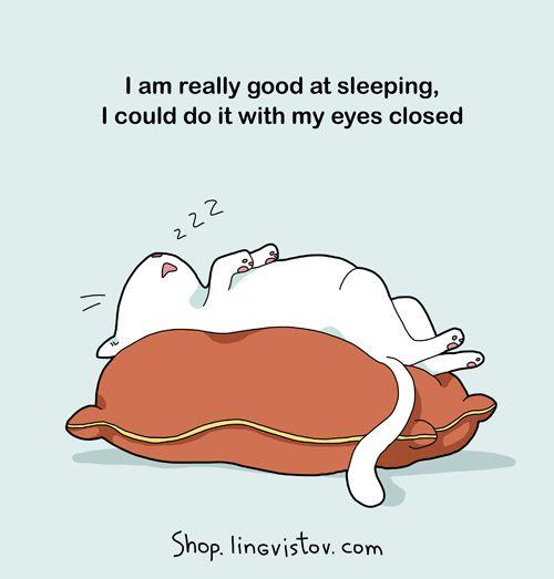 good at sleeping cat