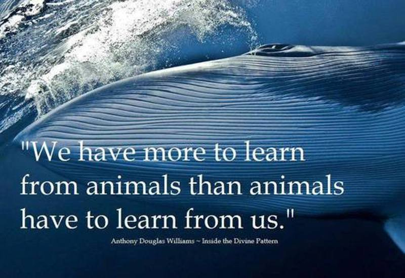 learn-from-animals