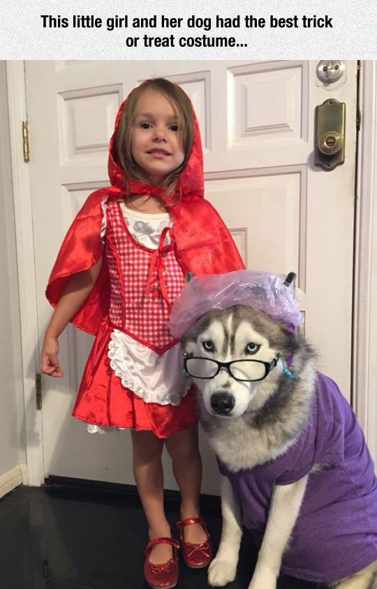 Halloween costume girl and dog