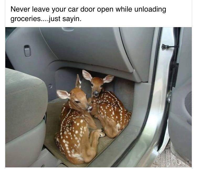 car door open baby deers