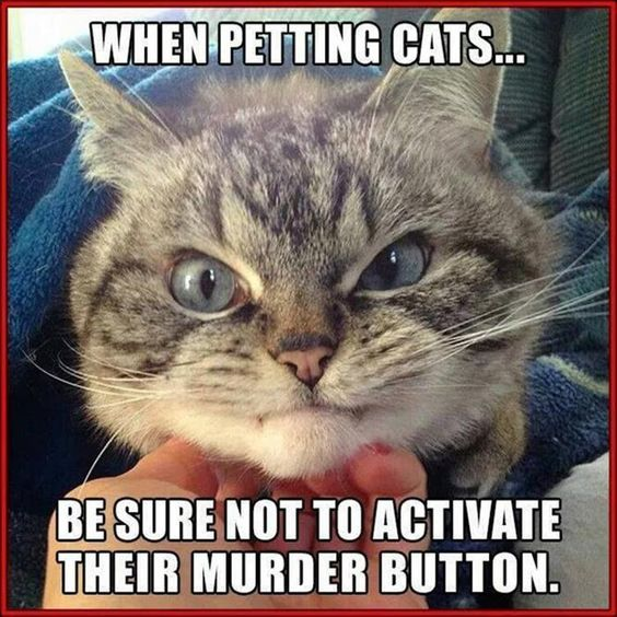 petting cats - murder button