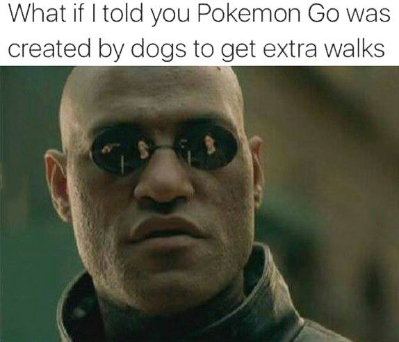 Pokemon Go created by dogs