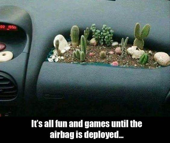 airbag - cacti