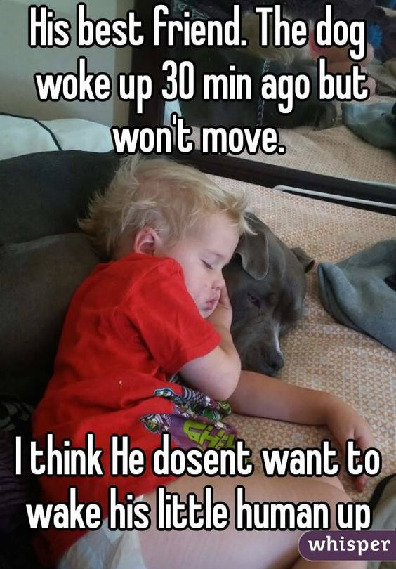 dog woke not move little human