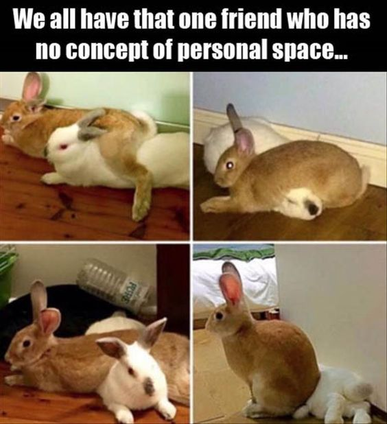 friend no personal place rabbits