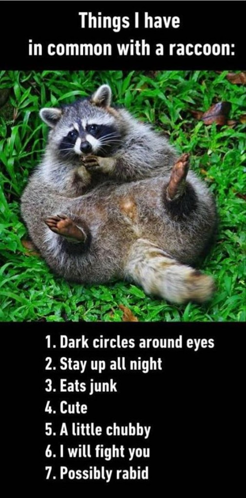 things I have in common with raccoon