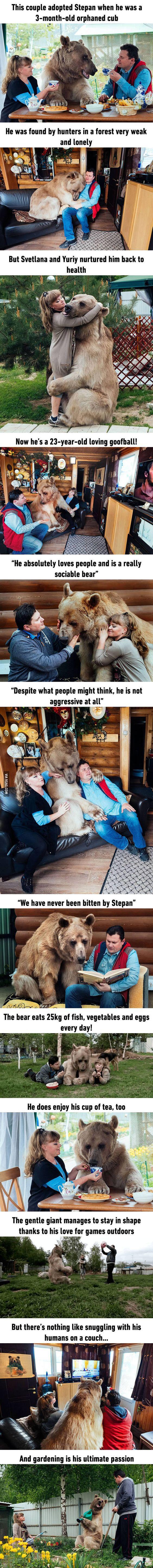 adopted-bear