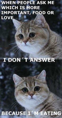 cat-food-or-love