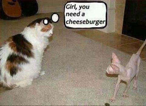 fat-skinny-cat