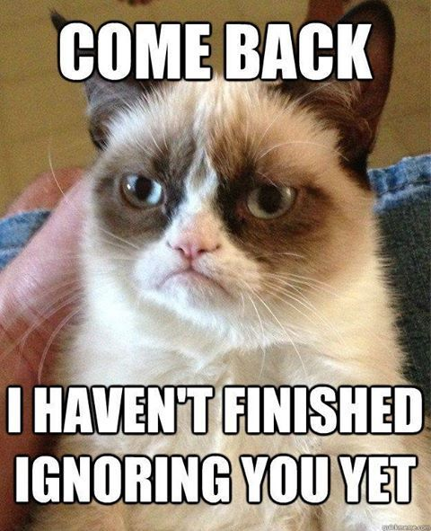 grumpy-cat-ignoring-you